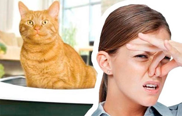 Почему пот пахнет кошачьей мочой у женщин